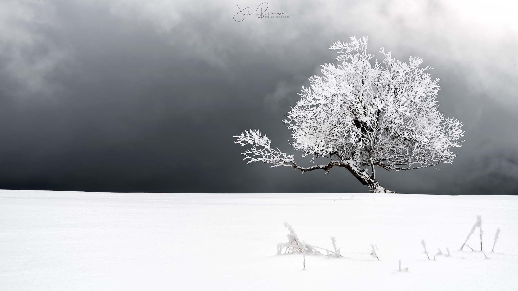 Blanc (Creux du Van - Suisse)