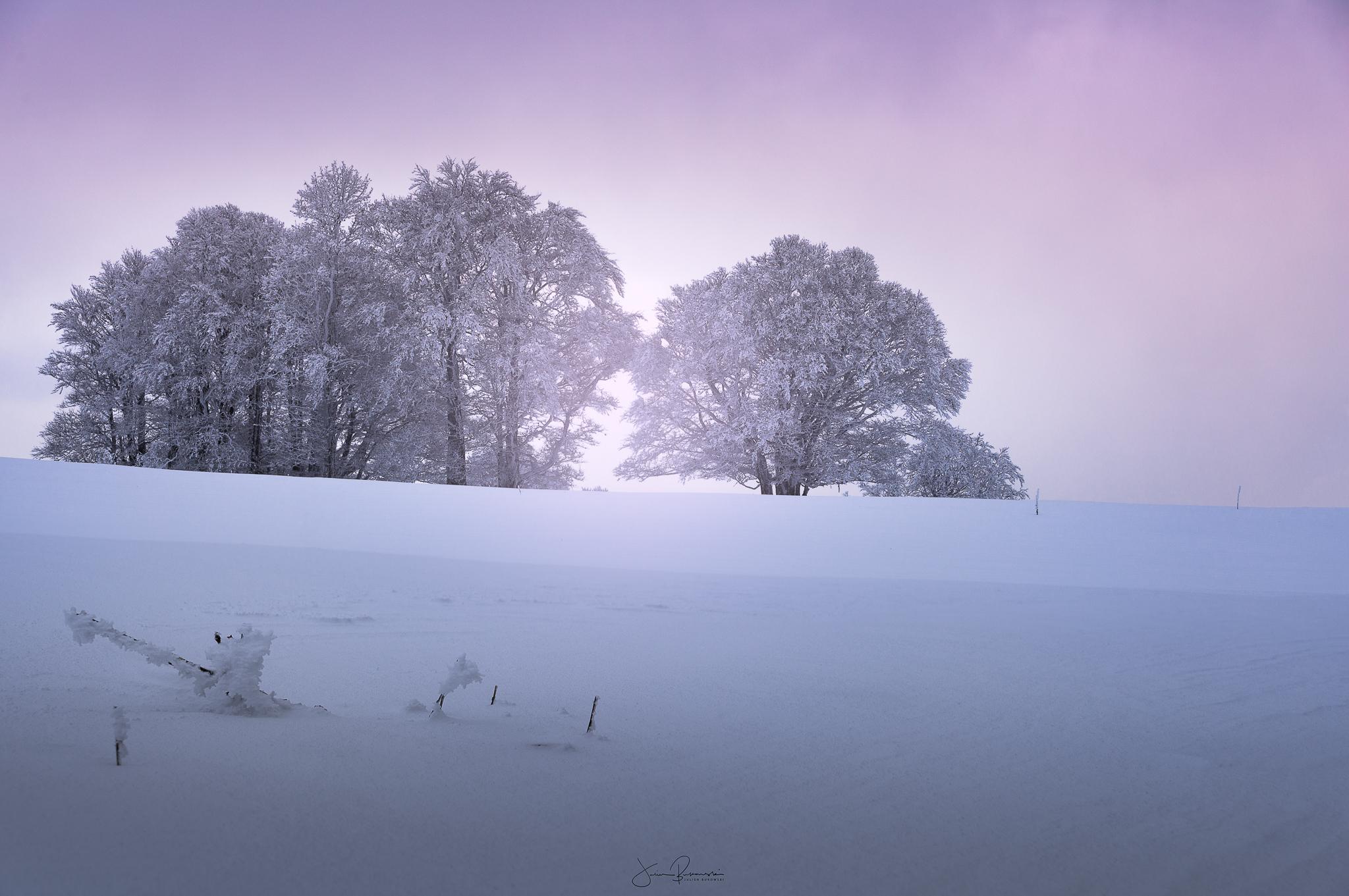 Light in the tree (Van Hollow - Suisse)