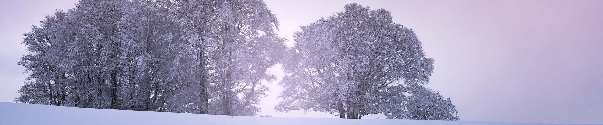 Light in the tree (Creux du Van - Suisse)