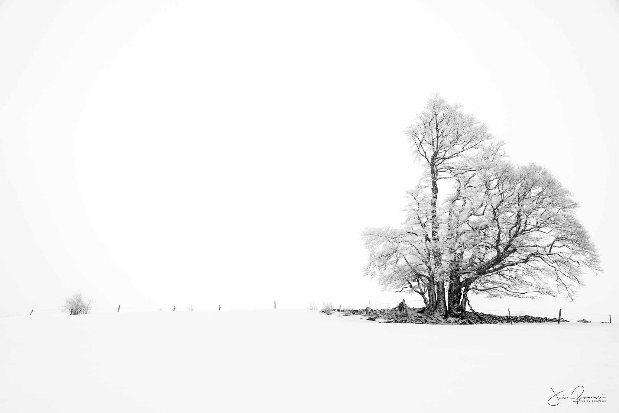 Solitude (Creux du Van - Suisse)