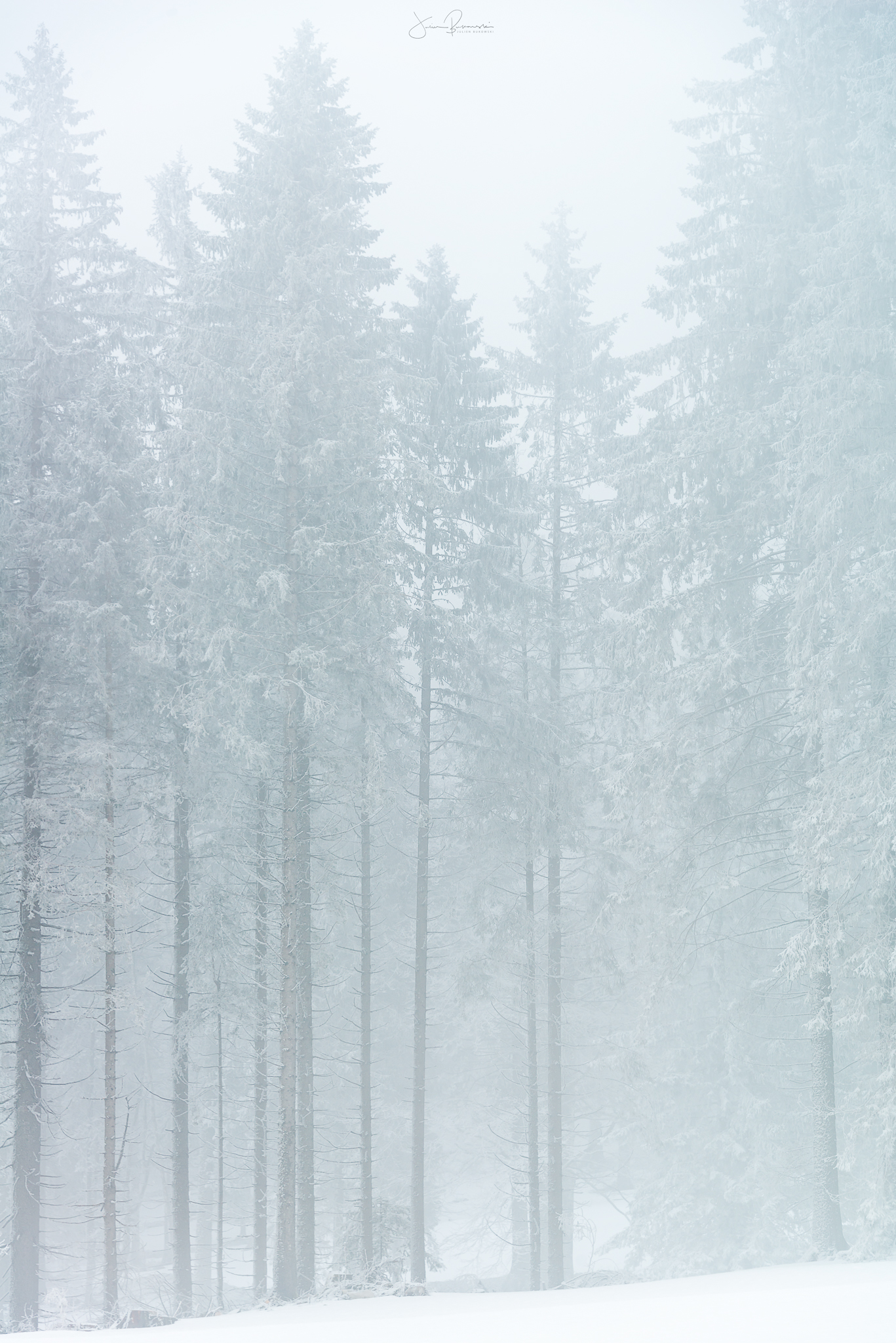 White line tree - Après